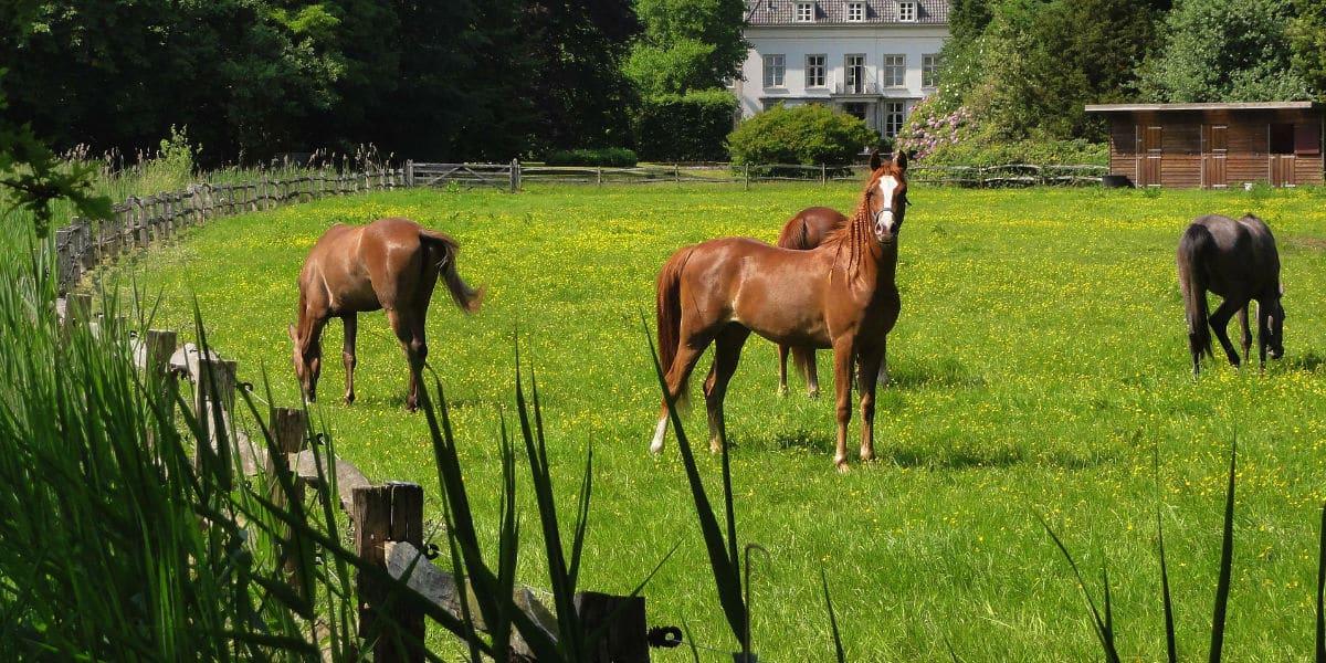 cloture chevaux