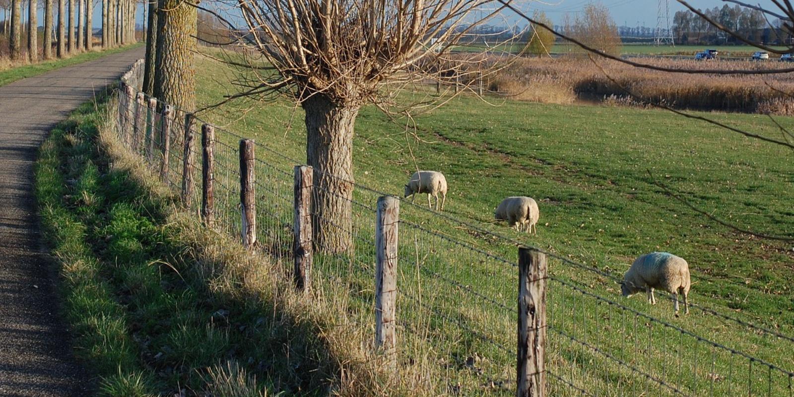 cloture grillagee prairie